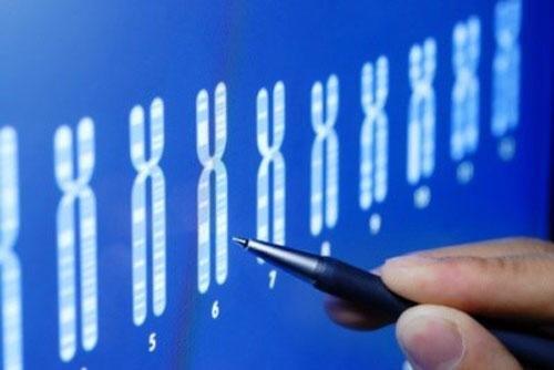 بوشهر| چهار مرکز ارائه خدمات ژنتیک در استان بوشهر