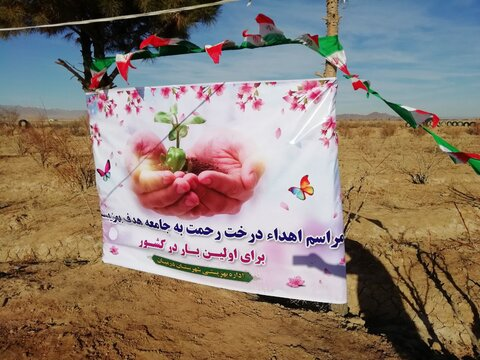 طرح درخت رحمت به نفع جامعه ی هدف بهزیستی در شهرستان درمیان افتتاح شد
