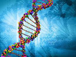 فعالیت ۲۸۰ مرکز مشاوره ژنتیک در کشور